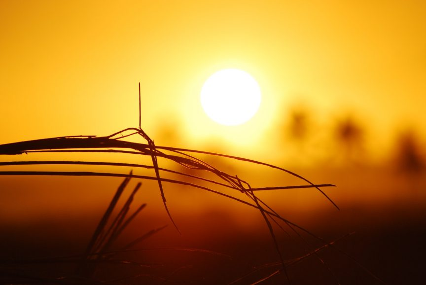 brown grass during sunrise
